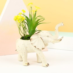 Elephant Flower Pot