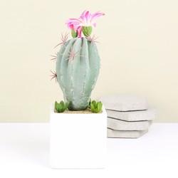 Round Artificial Cactus