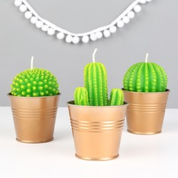 Temerity Jones Cactus Candles