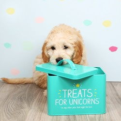 Happy Jackson 'Treats For Unicorns' Pet Food Tin