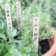 Lisa Angel Laser Cut Handmade Set of 7 Personalised Wooden Herb Garden Markers