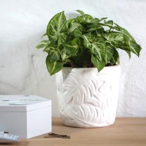 White Ceramic Botanical Leaf Planter