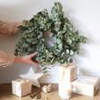 Lisa Angel Real Eucalyptus Wreath