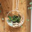 Lisa Angel Glass Hanging Terrarium with Cacti