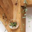 Lisa Angel Round Glass Hanging Terrarium with Cacti