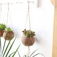 Lisa Angel with Fair Trade Kokodama Hanging Coconut Succulent