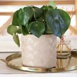Lisa Angel Ceramic Gold Shell Planter