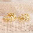 Lisa Angel Ladies' Mini Crystal Fern Hoop Earrings in Gold