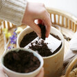 Lisa Angel Seed Card Planting Process