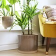 Large Grey Pot with Neutral Base from Garden Trading on the Floor with a Plant