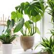 Large Stone Grey Plant Pot on Windowsill
