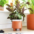 Garden Trading Terracotta Planter on Floor with Plant