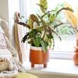 Garden Trading Terracotta Planter on Windowsill