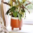 Garden Trading Terracotta Planter on Windowsill with Plant
