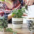 Ladies' Sass & Belle Black & White Sgraffito Planter
