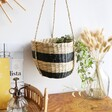 Organic Style Sass & Belle Black Striped Seagrass Hanging Planter, H15cm