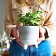 Sass & Belle Mojave Glaze Grey Planter
