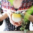 Sass & Belle Mojave Glaze Yellow Indoor Planter