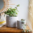 Queen Bee Cement Planter with Mini Planter