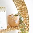 Woodland Fox Mini Terracotta Planter on Shelf with Trailing Plant