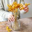 Lisa Angel Preserved Lagurus Bunny Tails Grass in Mustard