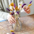 Bunch of Lagurus Bunny Tails Grass in Purple, Mustard and Natural Arranged in Vase