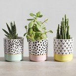 Sass & Belle Set of 3 'Memphis Modern' Mini Planters