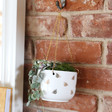 Lisa Angel Sass & Belle Queen Bee Hanging Planter