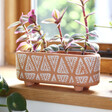 Lisa Angel Sass & Belle Terracotta Trough Planter