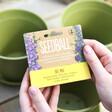 Lisa Angel Mini Meadow Bee Mix Seed Balls Gift Set