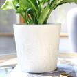 Lisa Angel Ceramic Wildflower Planter Homeware