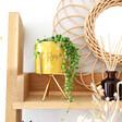 Lisa Angel Yellow Bee Print Mini Planter and Stand Homeware