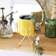 Lisa Angel Yellow Bee Print Mini Planter and Stand