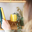 Lisa Angel Yellow Bee Print Planter and Stand