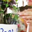 Lisa Angel Crystal Plant Watering Spike