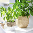 Lisa Angel with Sass & Belle Cement Basket Planters