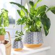 Lisa Angel Sass & Belle Japanese Inspired Blue Wave Planters