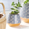 Ladies' Sass & Belle Japanese Inspired Small Blue Wave Planter