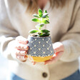 Lisa Angel Sass & Belle Japanese Inspired Small Blue Wave Planter