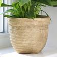 Lisa Angel with Medium Sass & Belle Sierra Cement Basket Planter