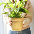Lisa Angel with Sass & Belle Sierra Cement Basket Planter