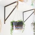 Lisa Angel with Stylish Sass & Belle Black Mojave Glaze Hanging Planter